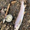 konnoさんの北海道白糠郡での釣果写真