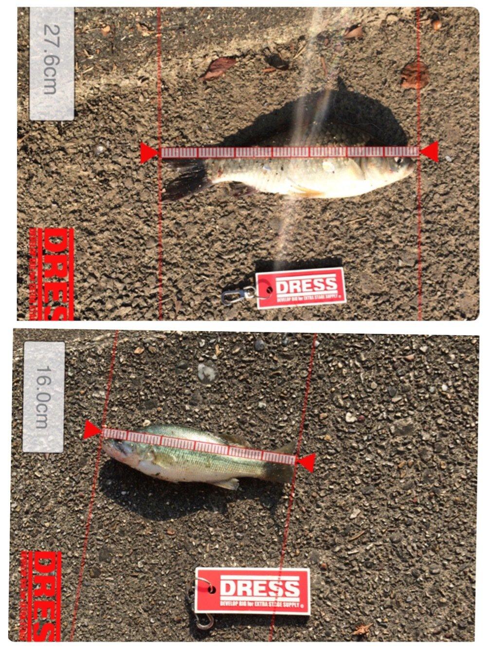 ヤスさんの投稿画像,写っている魚はブラックバス
