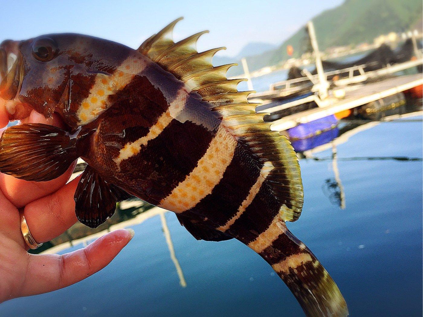 きみ☆チヌlove♡さんの投稿画像,写っている魚はアカハタ
