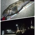 Tomo_Pandaさんの宮城県亘理郡でのアイナメの釣果写真