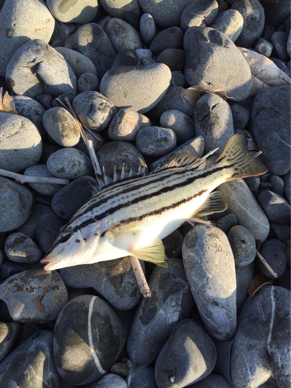やぎゆさんの投稿画像,写っている魚は