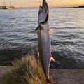 下手の釣り好きさんの秋田県男鹿市での釣果写真