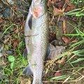 Masakiさんの北海道広尾郡での釣果写真