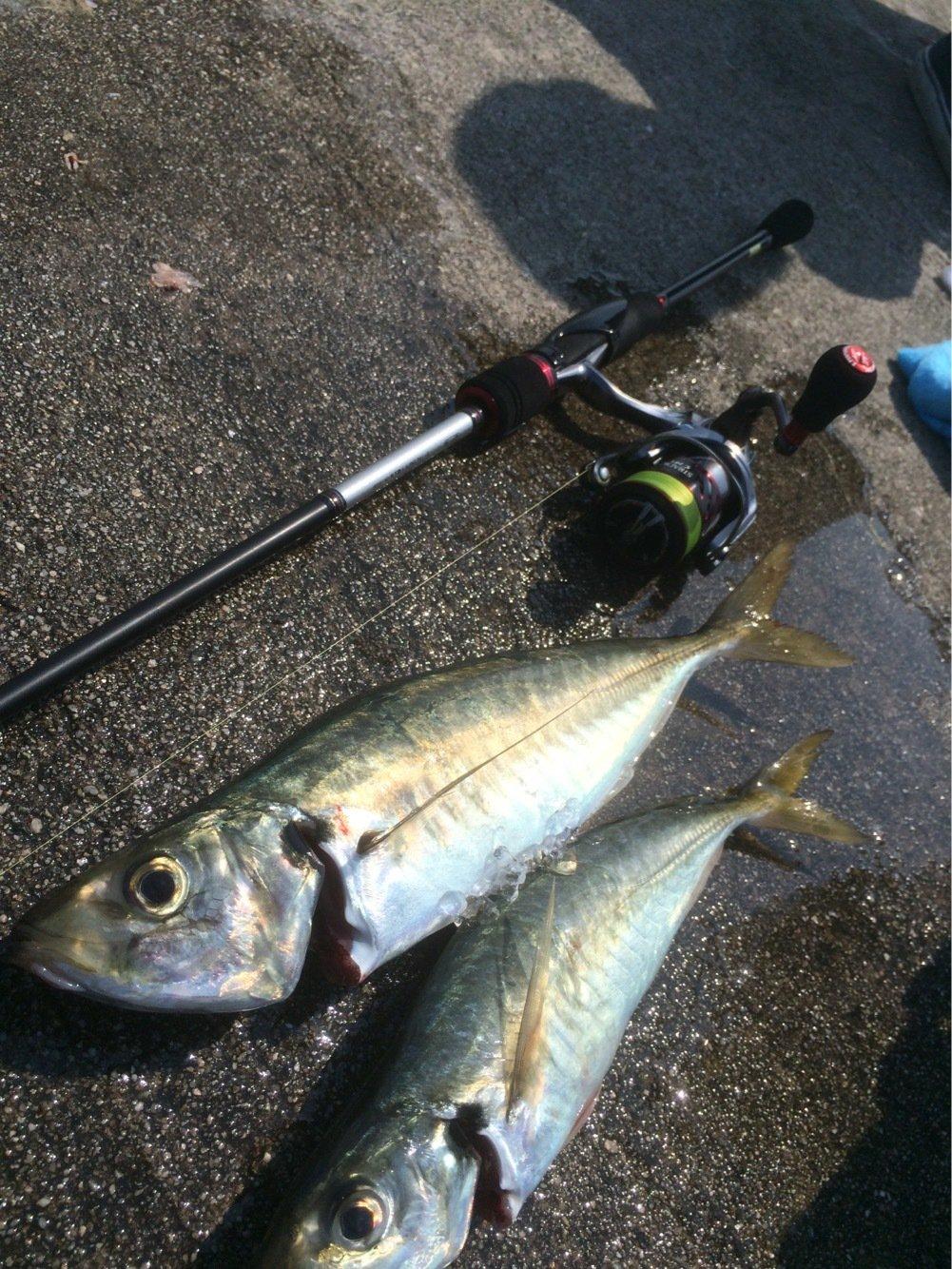 Tbsmanさんの投稿画像,写っている魚はアジ