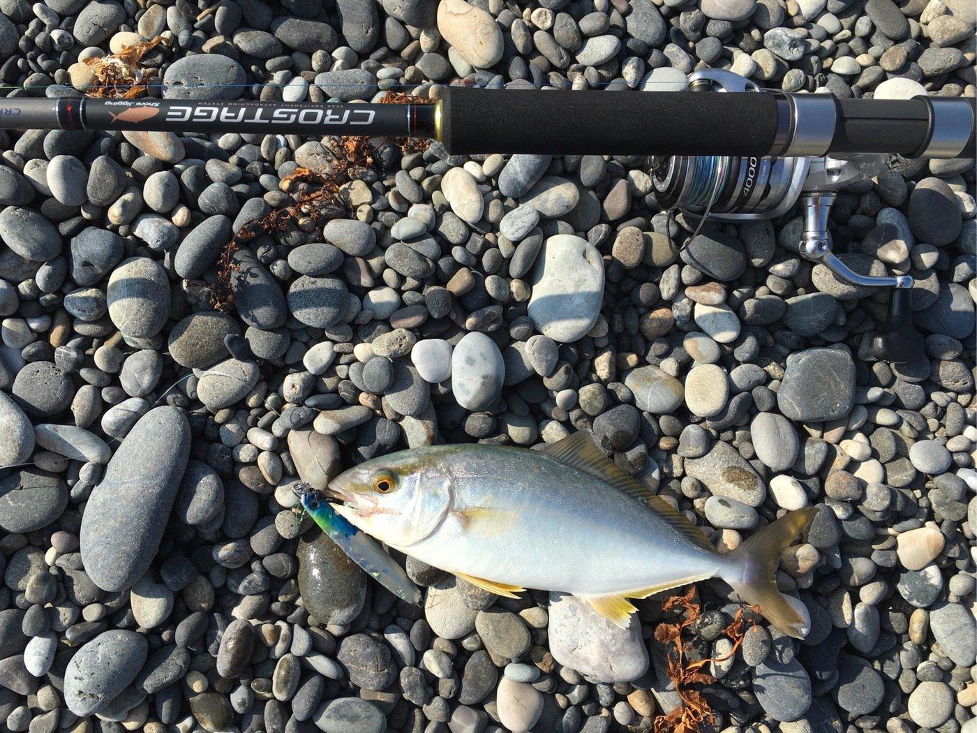 ゆーやさんの投稿画像,写っている魚はブリ