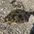 Monke Smileさんの千葉県いすみ市でのヒラメの釣果写真