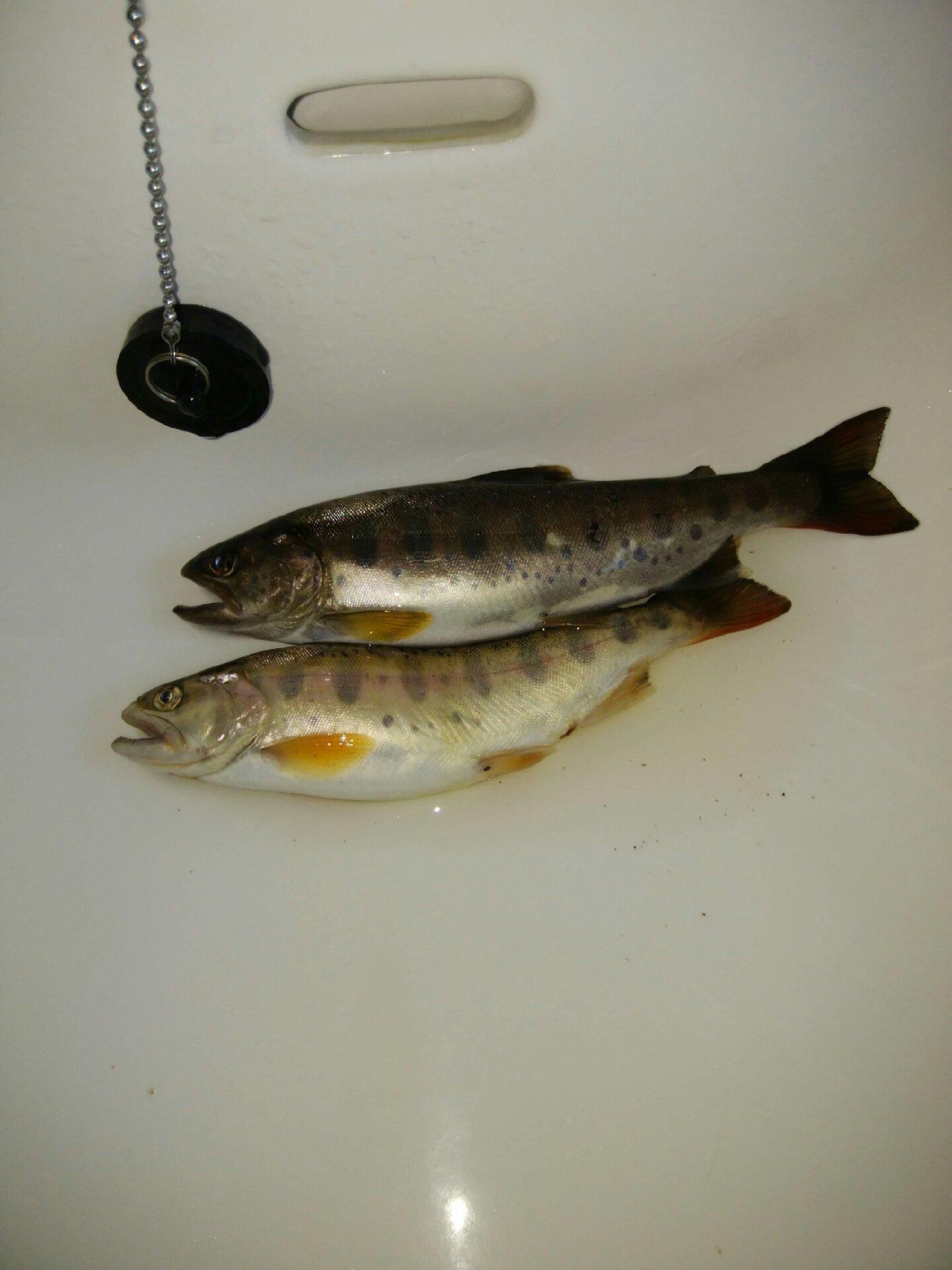 タツヤさんの投稿画像,写っている魚は,