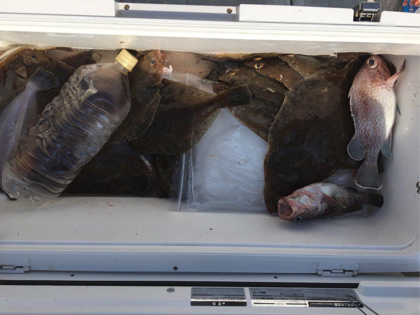釣り人さんの投稿画像,写っている魚はカレイ