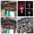 磯ROCK魂 直也さんの静岡県熱海市でのカサゴの釣果写真