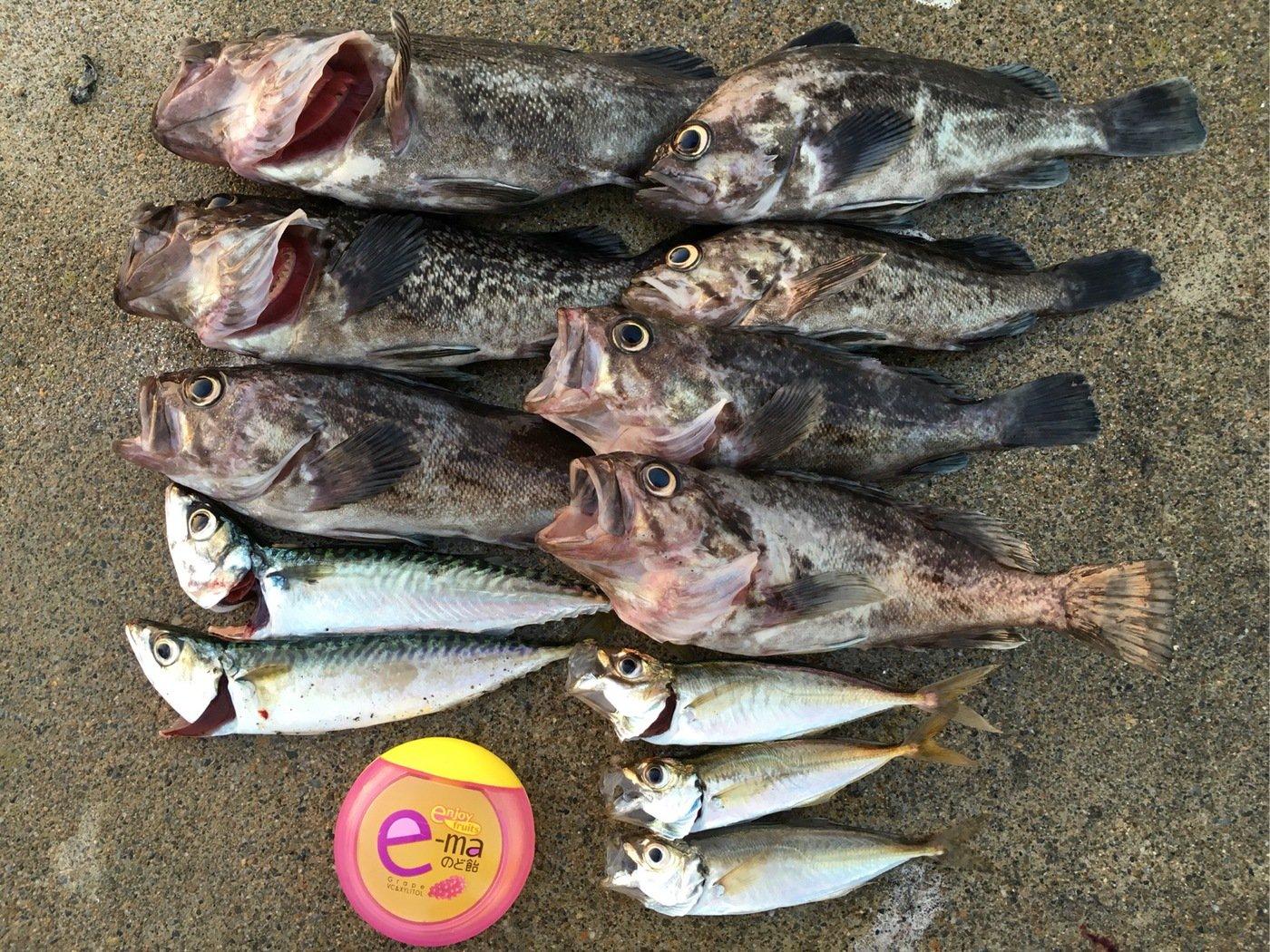 Murakameepさんの投稿画像,写っている魚はクロソイ