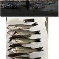 キラままさんの三重県桑名郡での釣果写真