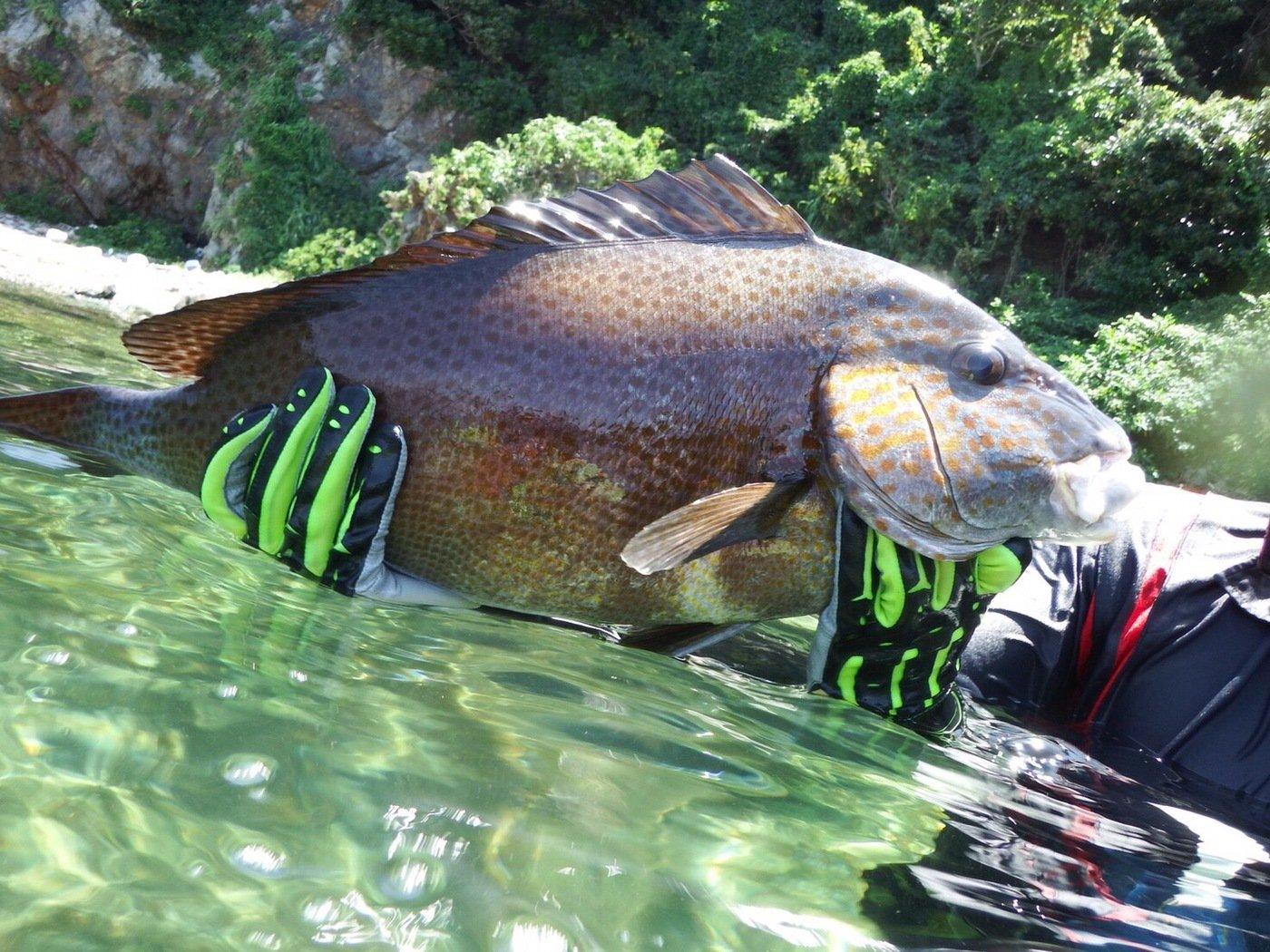 たくさんの投稿画像,写っている魚はコロダイ