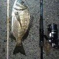 孤高の南国アングラーさんの鹿児島県奄美市でのクロダイの釣果写真