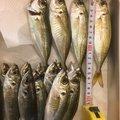 さまやんさんの三重県伊勢市での釣果写真