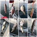 赤眼のあきと(REV)さんの千葉県千葉市での釣果写真
