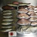 とみちゃんさんの香川県東かがわ市での釣果写真