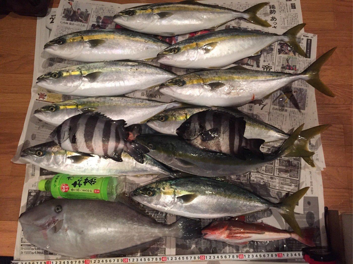 タクヤさんの投稿画像,写っている魚はイシダイ