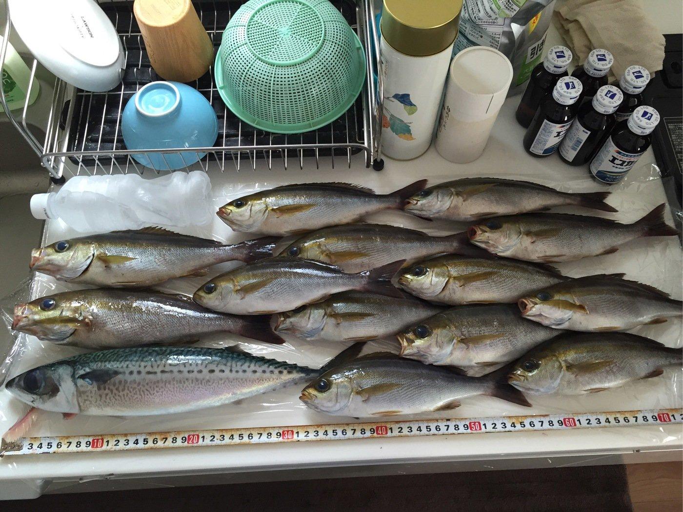 タクヤさんの投稿画像,写っている魚はイサキ
