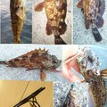 snufkin49さんの兵庫県明石市でのアナハゼの釣果写真