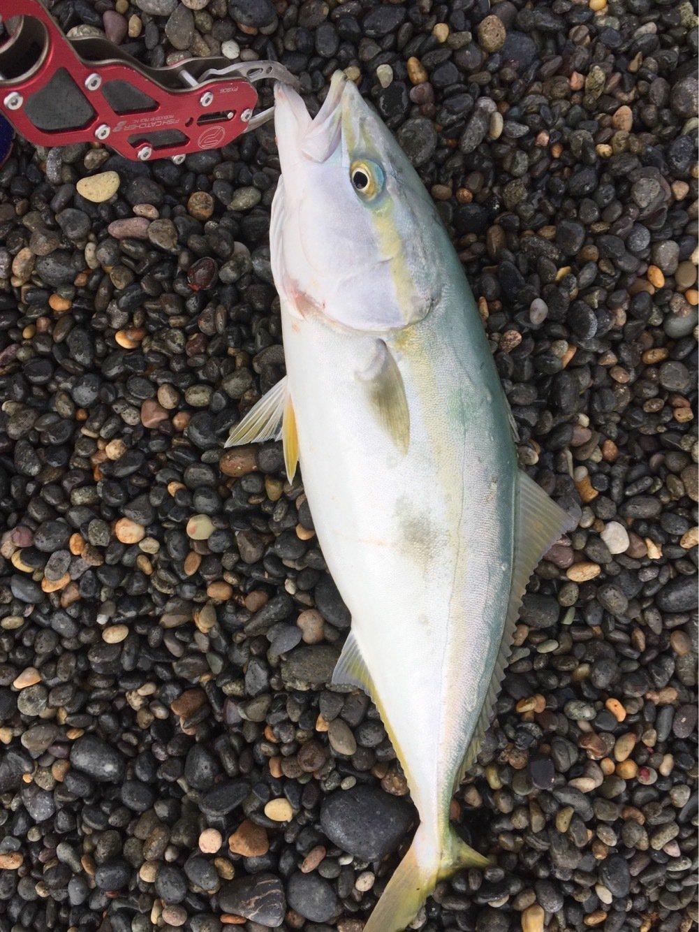 イーグルさんの投稿画像,写っている魚はブリ