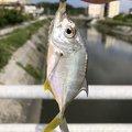 yoshiさんの沖縄県豊見城市での釣果写真
