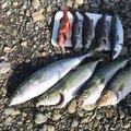 ナギサのカゴ釣り師さんの和歌山県西牟婁郡での釣果写真