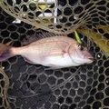 まぶさんの山口県阿武郡での釣果写真