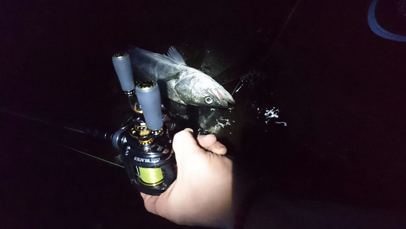 アブさんの投稿画像,写っている魚はスズキ