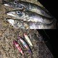 かいさんの神奈川県横浜市でのタチウオの釣果写真