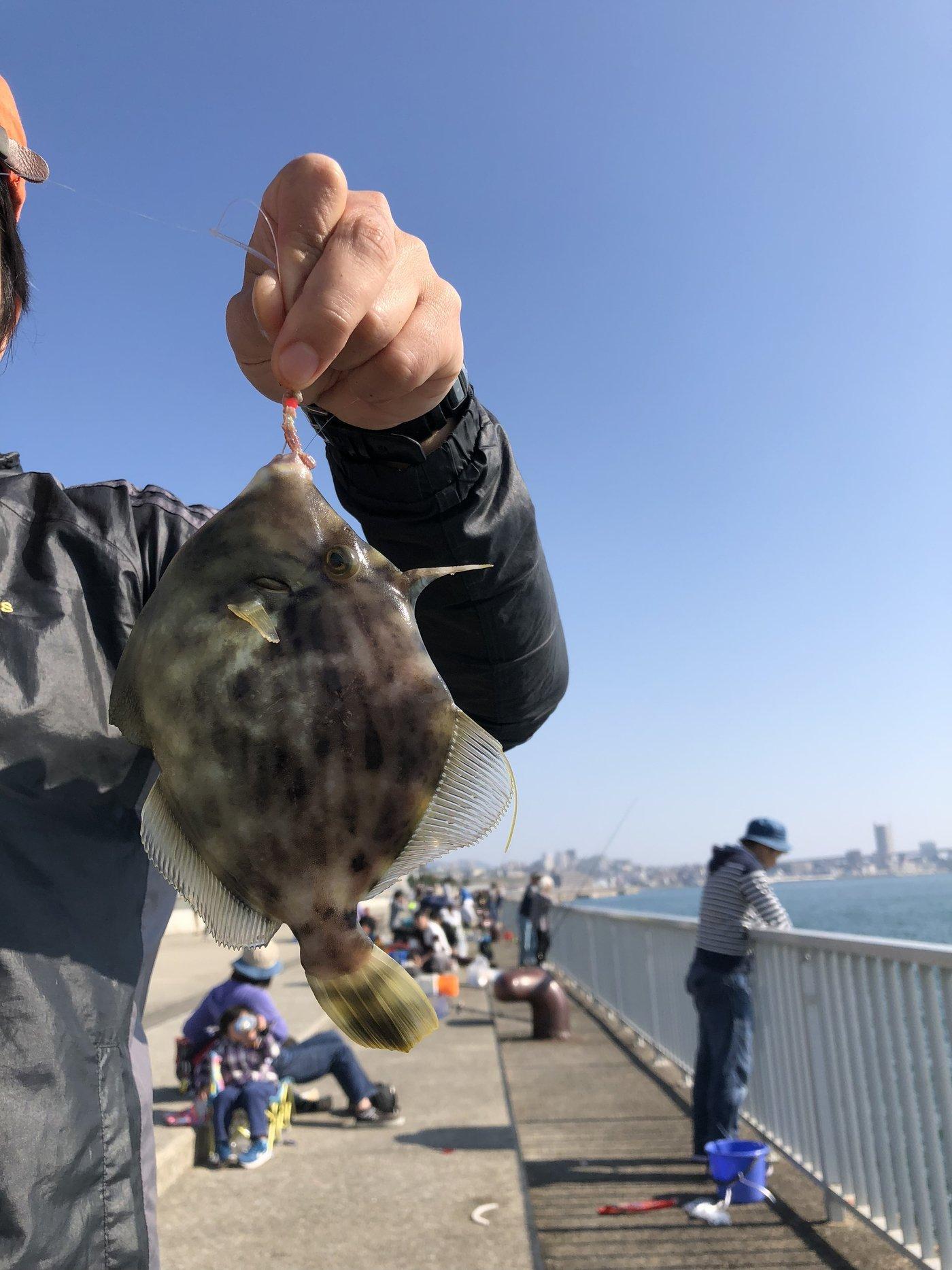 Yassさんの投稿画像,写っている魚はカワハギ