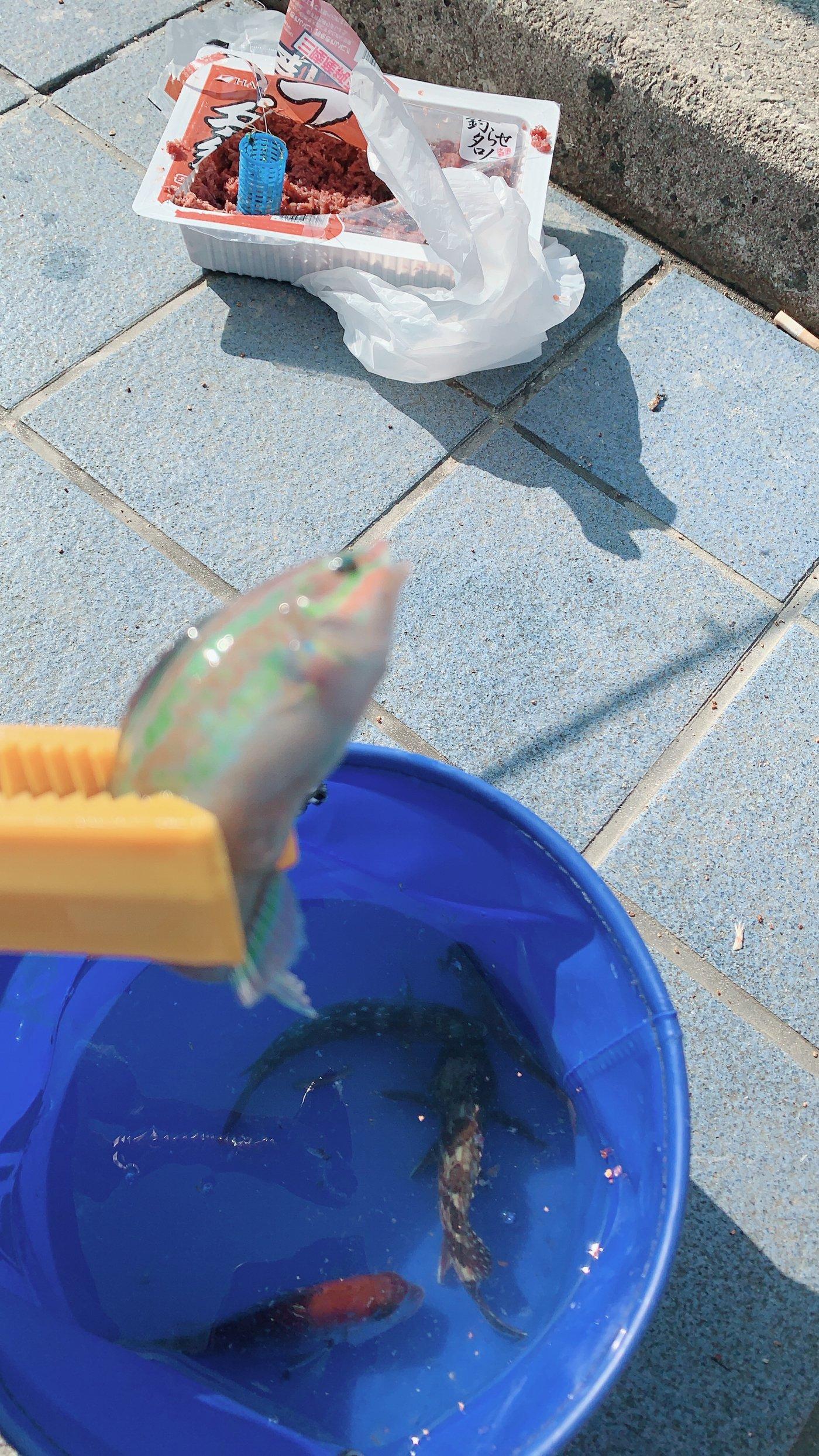 booさんの投稿画像,写っている魚はキュウセン
