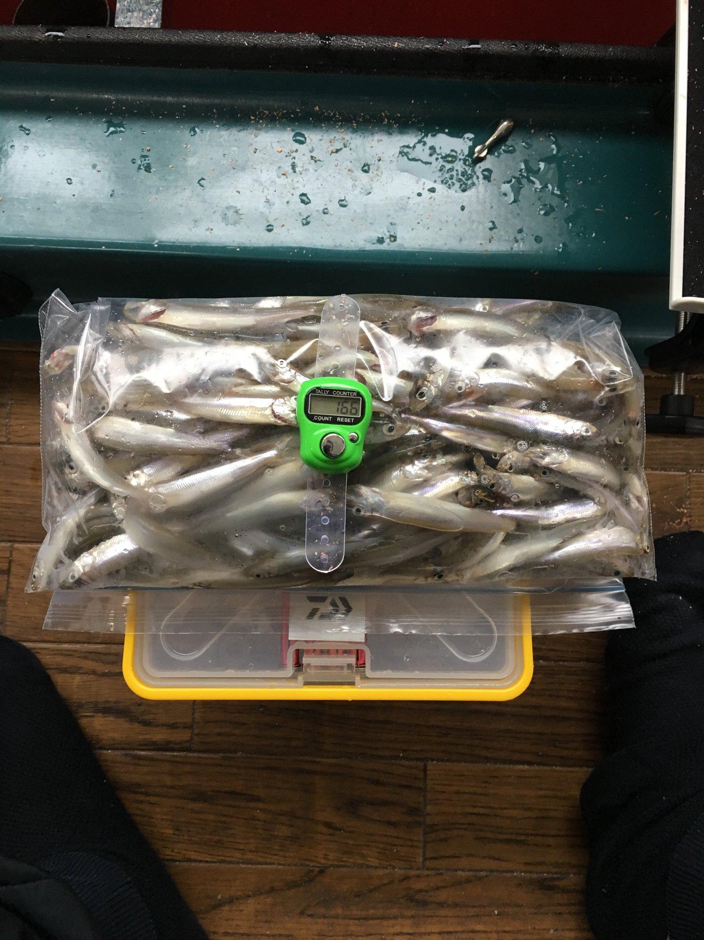 佐野さんの投稿画像,写っている魚はワカサギ