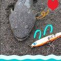 さよ*ˊᵕˋ)੭さんの千葉県館山市でのコチの釣果写真