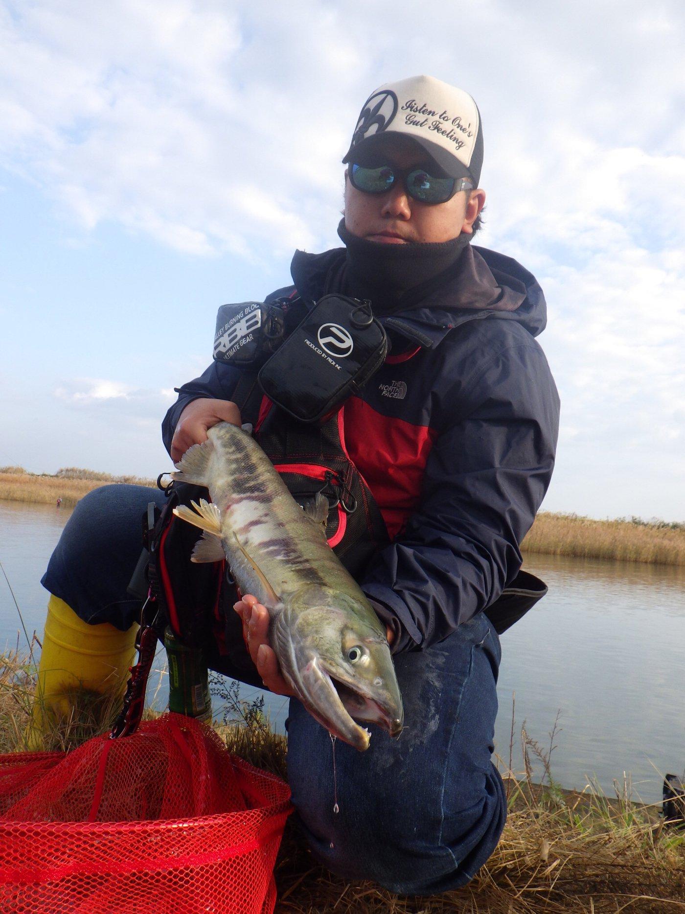 タツヨシさんの投稿画像,写っている魚はサケ