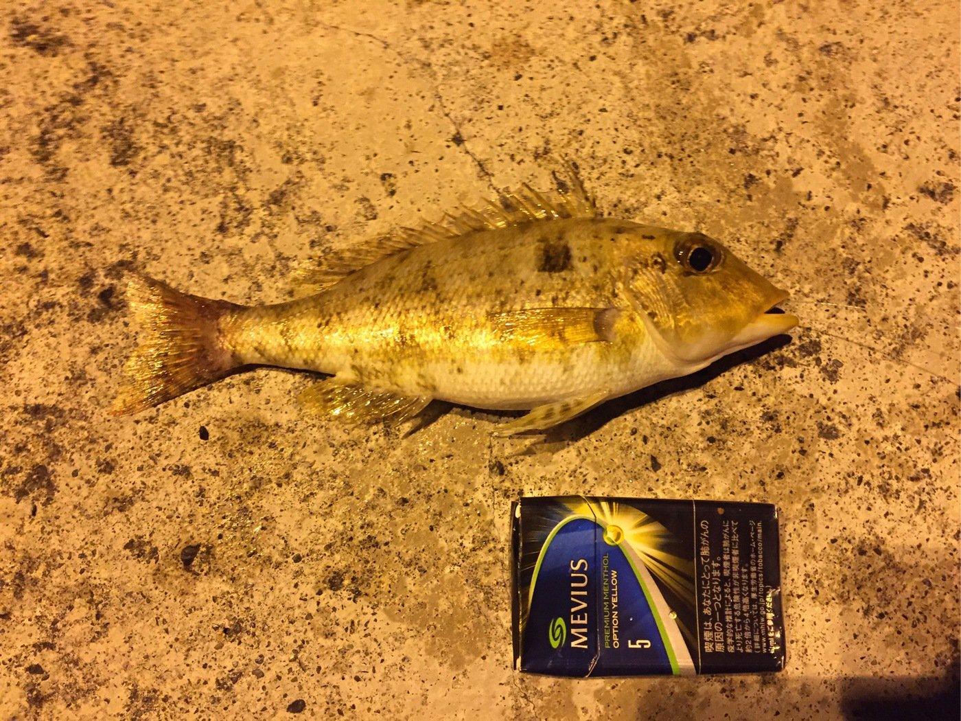 ザキヤマさんの投稿画像,写っている魚はフエフキダイ