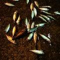 Load Silverさんの山形県東田川郡での釣果写真