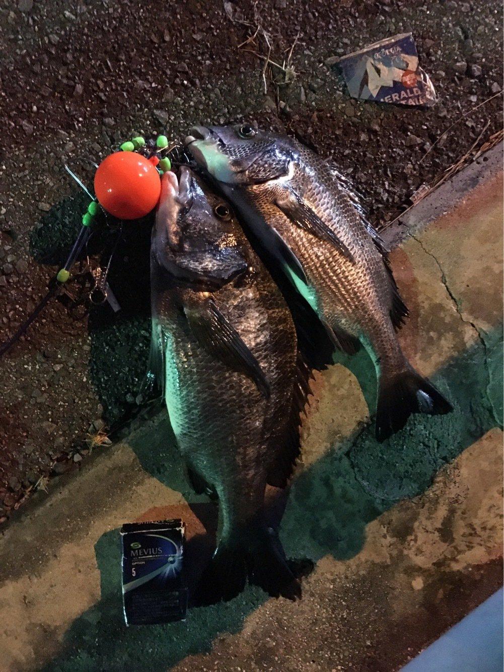 うきさんの投稿画像,写っている魚はクロダイ