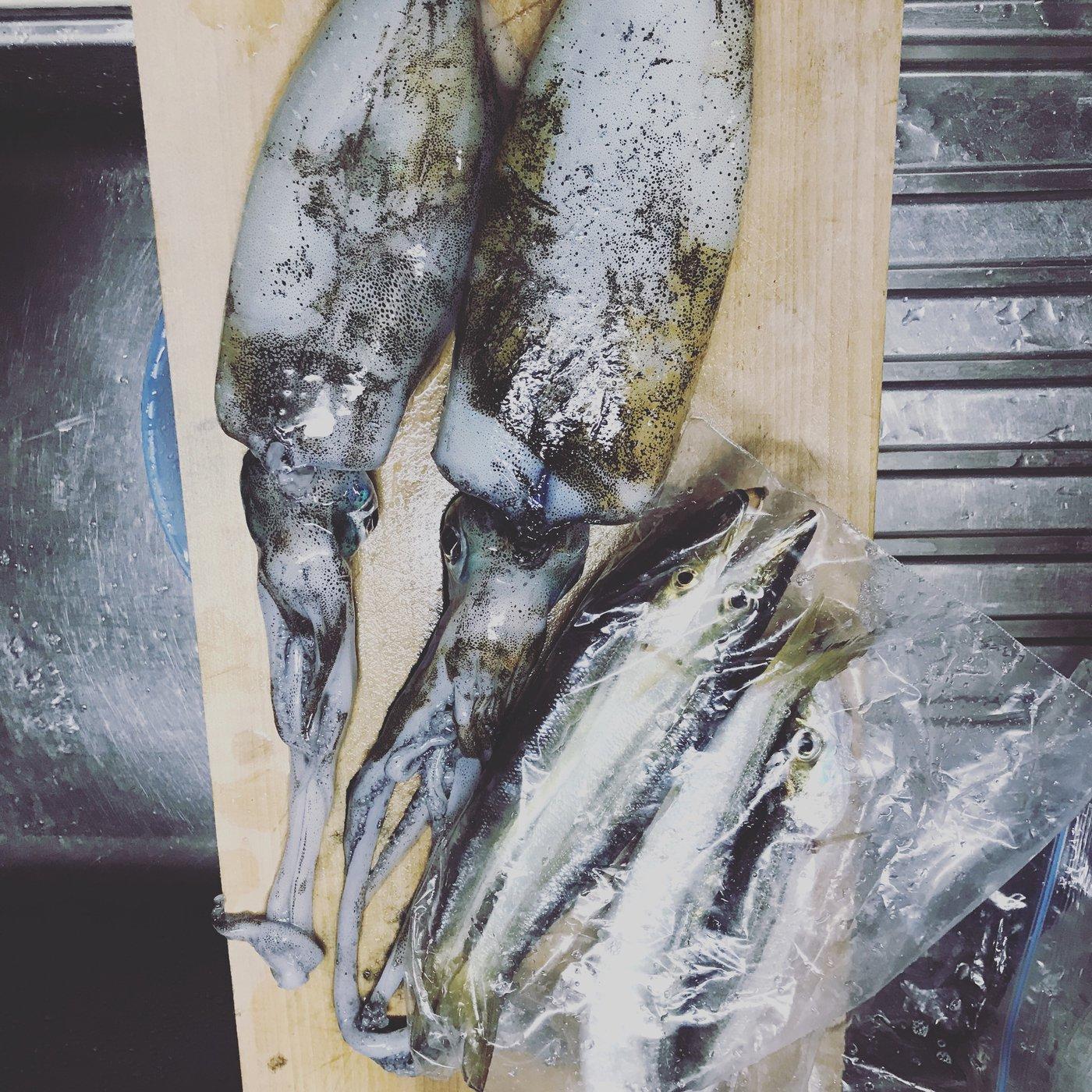 あららきんぐさんの投稿画像,写っている魚はアオリイカ