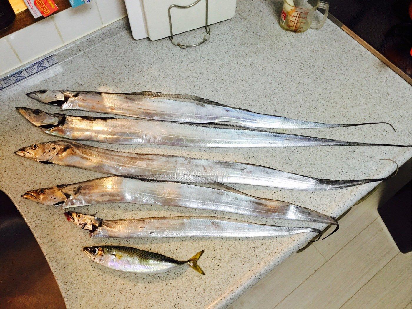ゆきえさんの投稿画像,写っている魚はタチウオ
