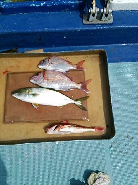 まささんの投稿画像,写っている魚は