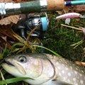 れいんぼーほたてさんの北海道枝幸郡での釣果写真