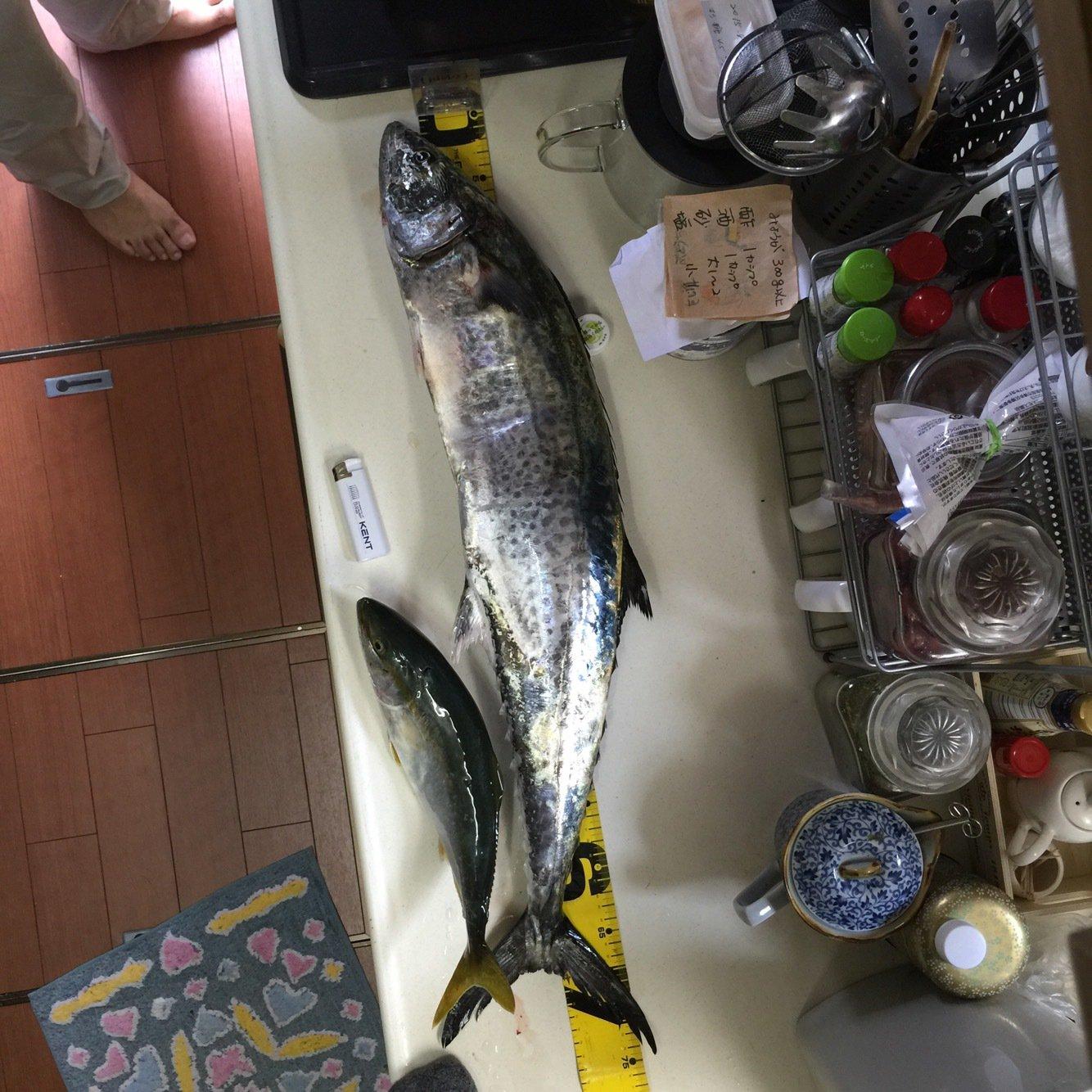 まささんの投稿画像,写っている魚はサワラ