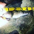 けんぴさんの北海道島牧郡での釣果写真