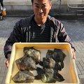 たこ焼き屋さんの東京都世田谷区での釣果写真