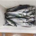 R.eさんの秋田県能代市での釣果写真