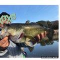 きのまーさんの茨城県土浦市での釣果写真