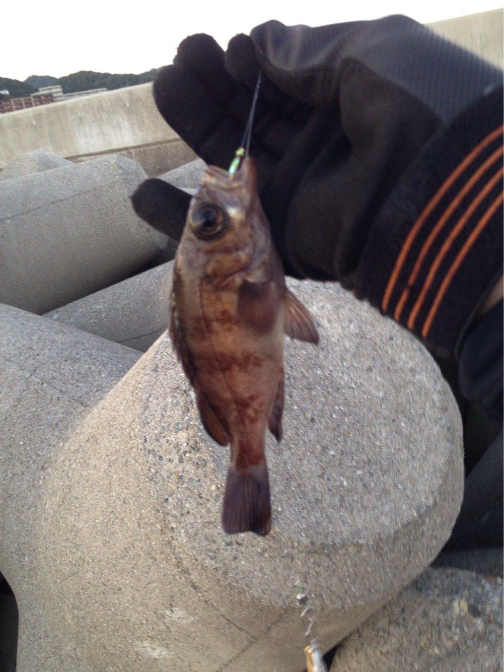 がーくんさんの投稿画像,写っている魚はタチウオ