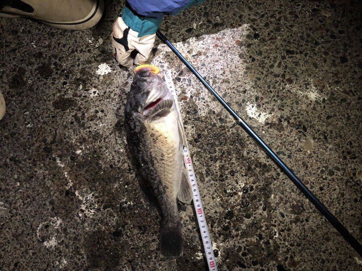 HAYATEさんの投稿画像,写っている魚はクロソイ