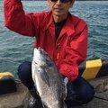 ☆☆由☆☆さんの千葉県安房郡でのクロダイの釣果写真