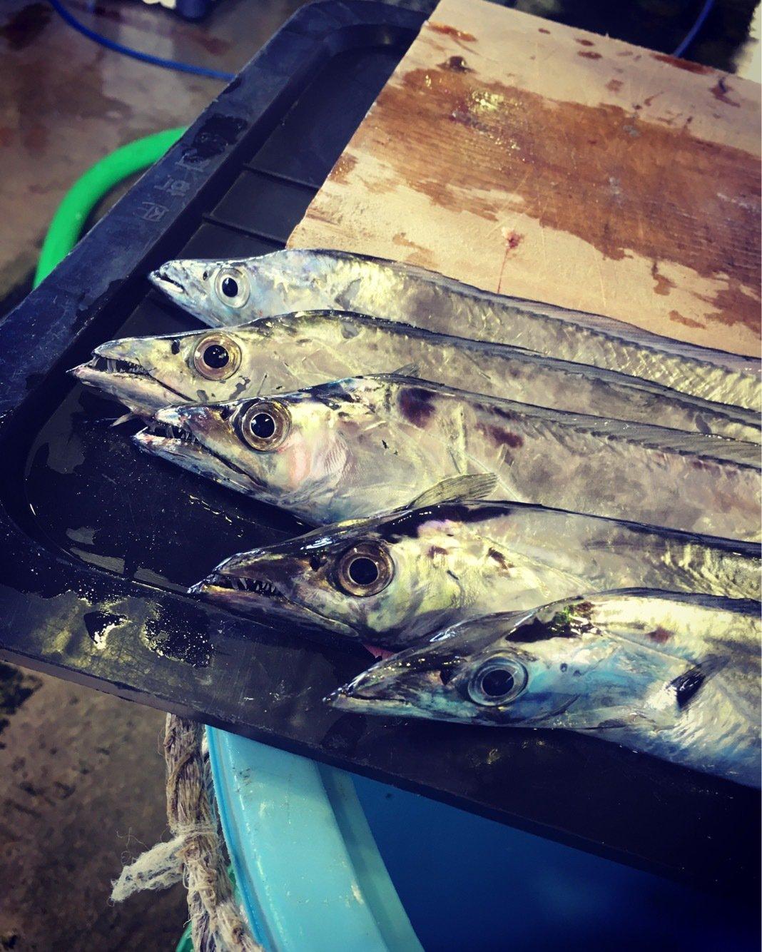 NTR-8さんの投稿画像,写っている魚はタチウオ